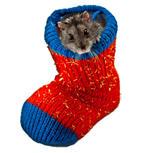 mouse in sock